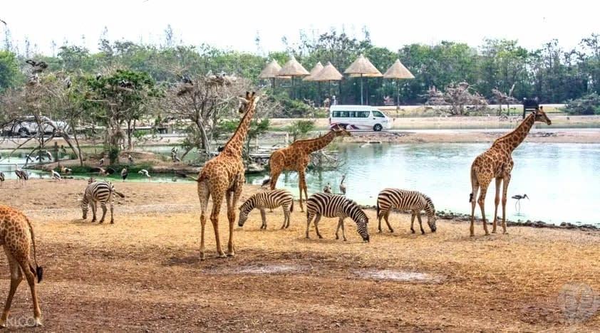 Animals at Safari World Bangkok
