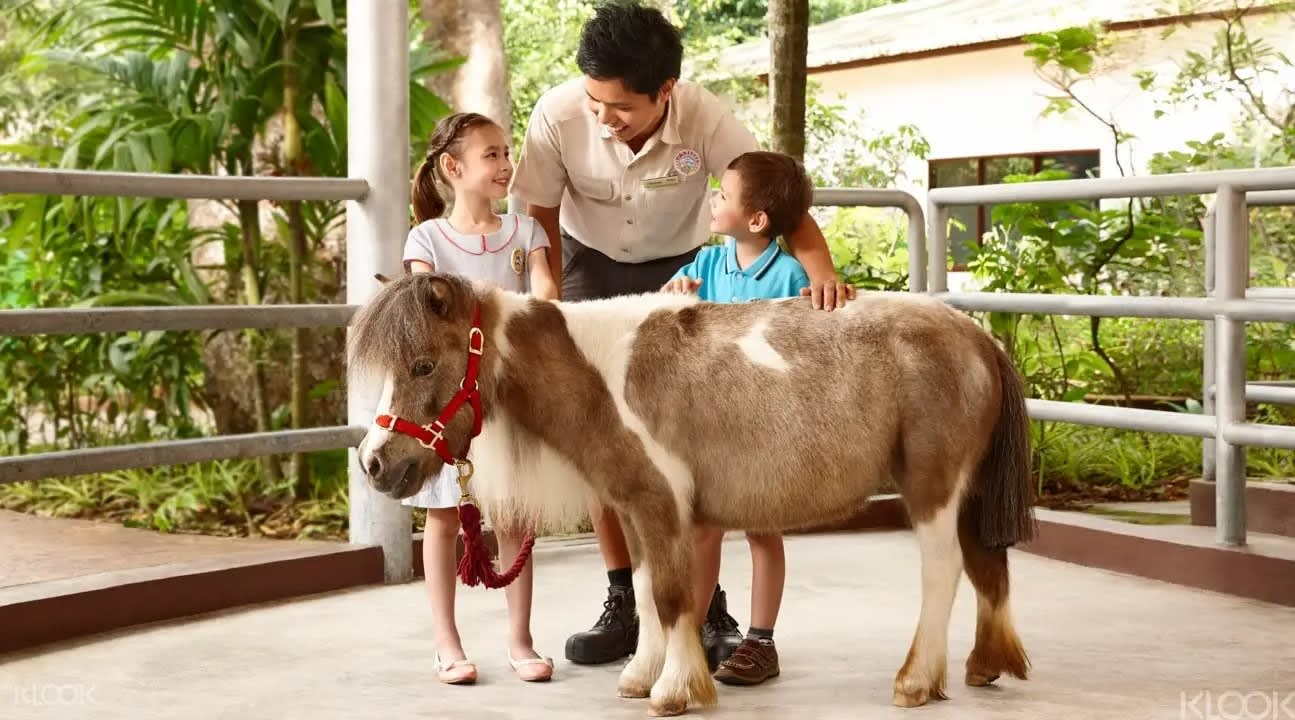 Zoo keeper with pony at the Singapore Zoo
