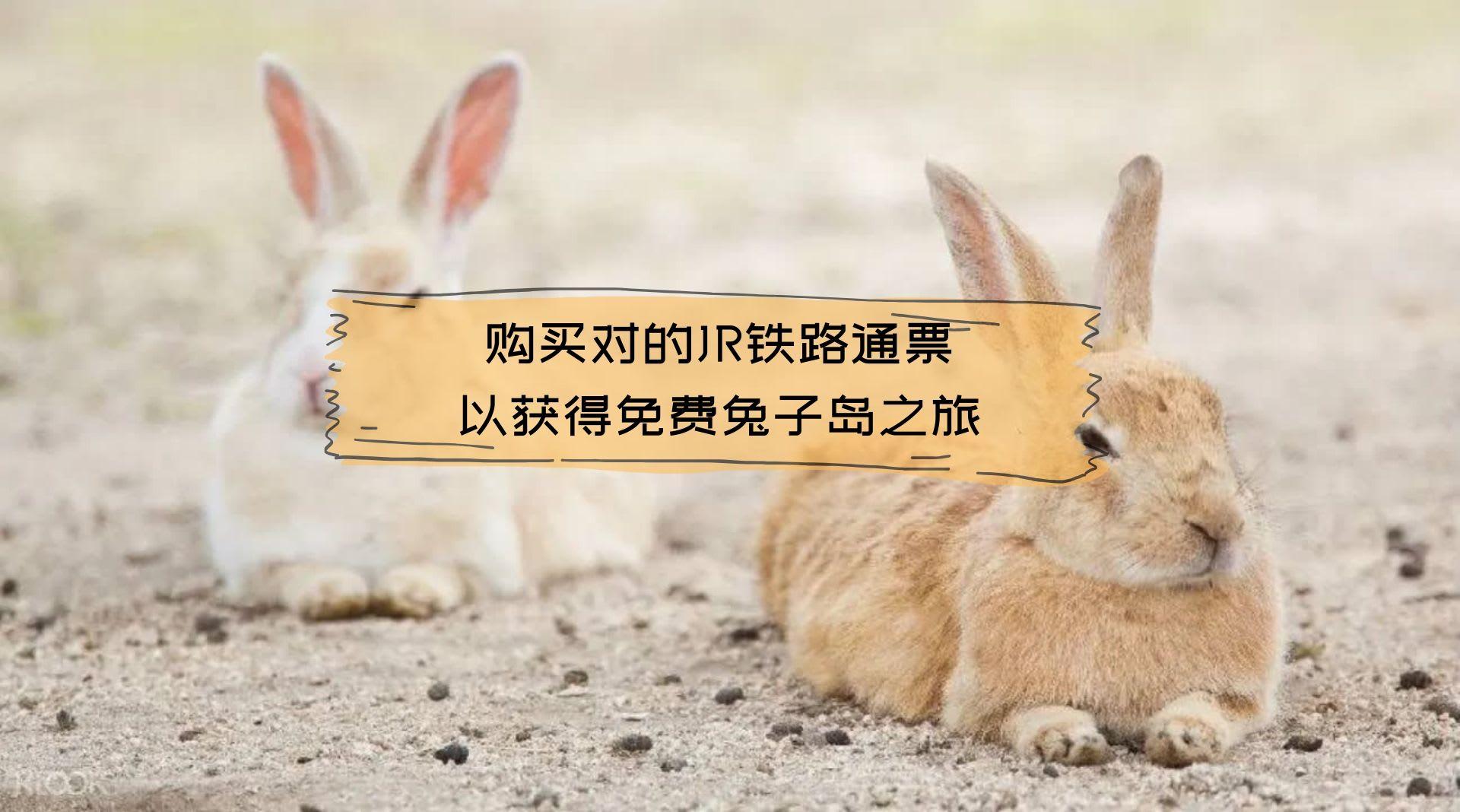 购买对的JR铁路通票 以获得免费兔子岛之旅