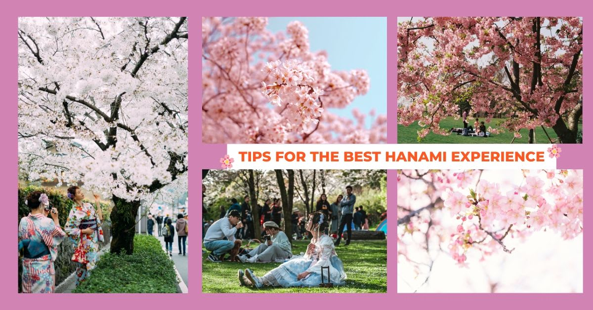 TIPS FOR THE BEST HANAMI EXPERIENCE