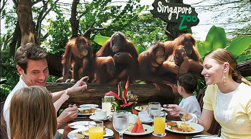 all-you-need-to-know-about-Singapore's-zoological-parks-breakfast-with-ah-meng