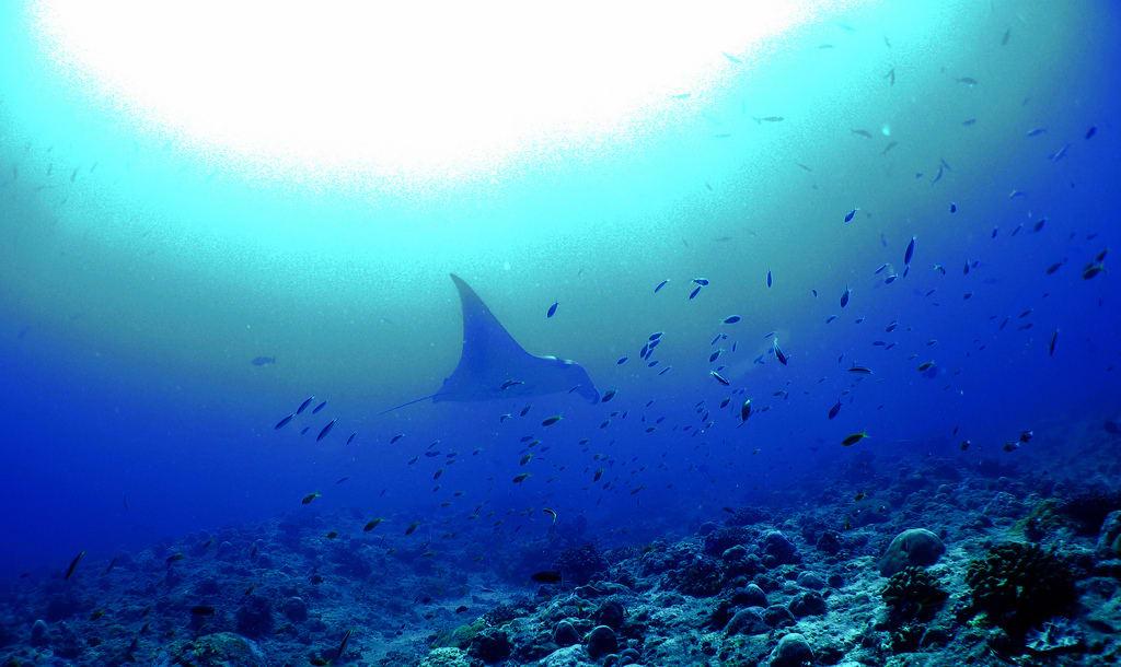 Ari Atoll dive Maldives