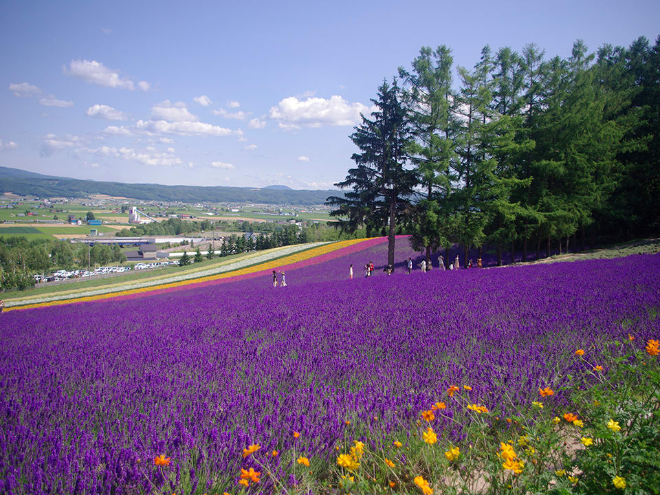How-To-Use-Your-Japan-Rail-Pass-Hokkaido-lavender-field