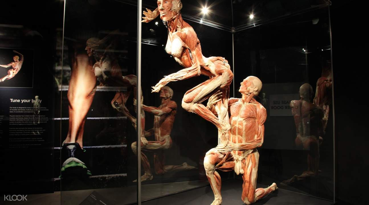 Klook-Bizarre-Experiences-Body-Worlds