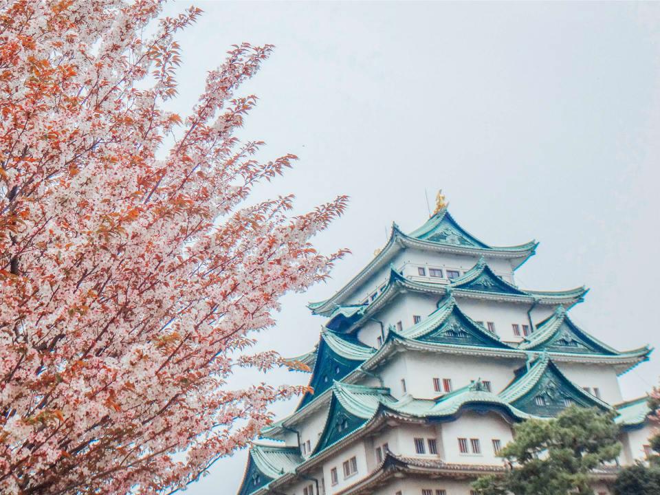 Nagoya Castle Cherry Blossom