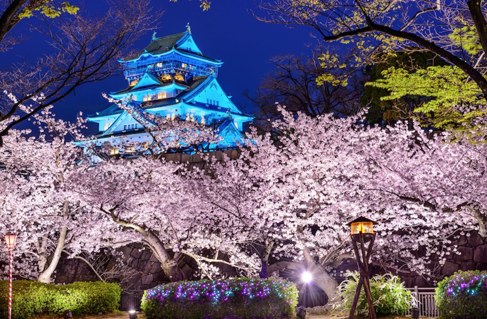 Osaka Cherry Blossom