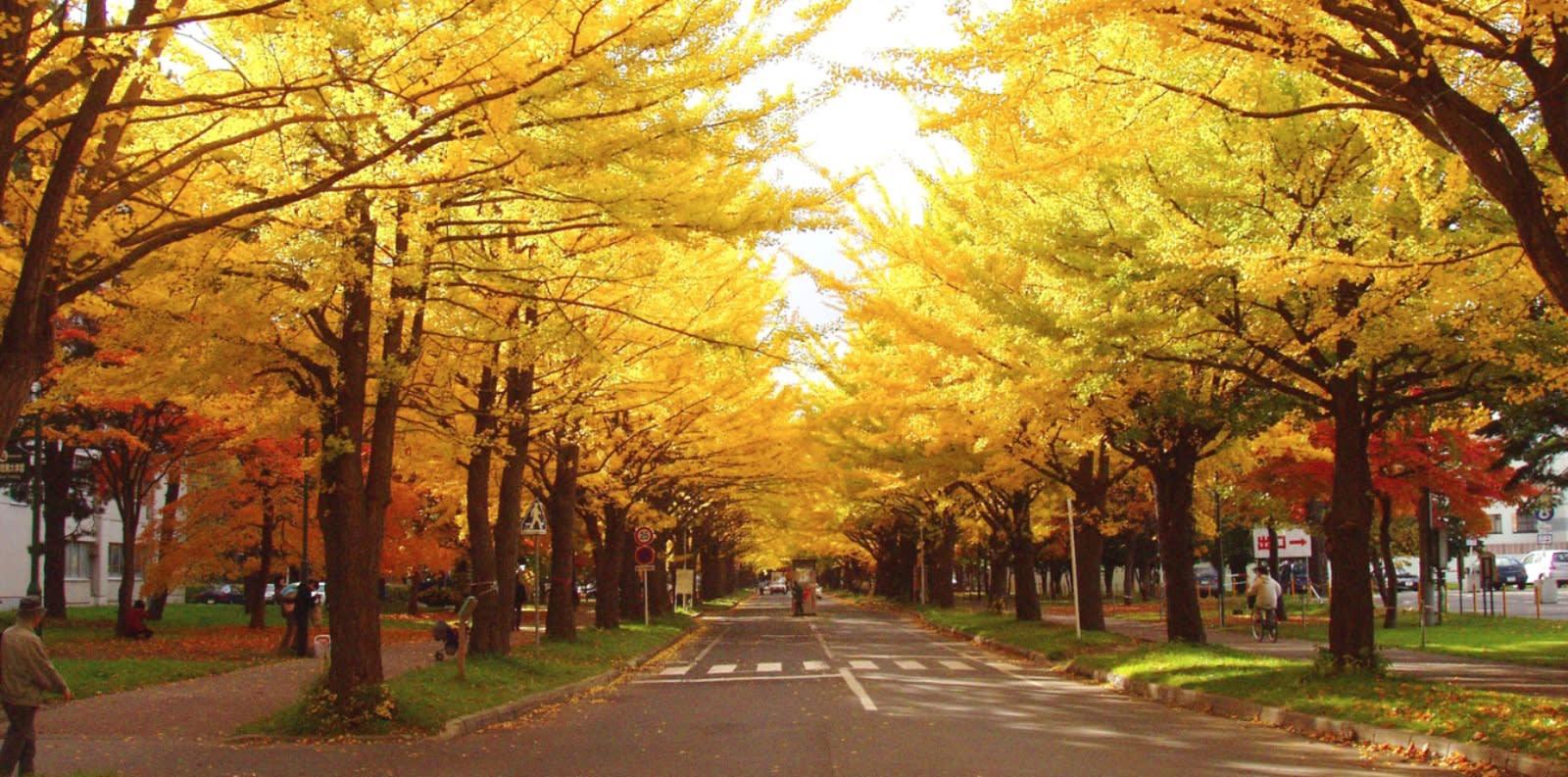 Autumn foliage in Sapporo