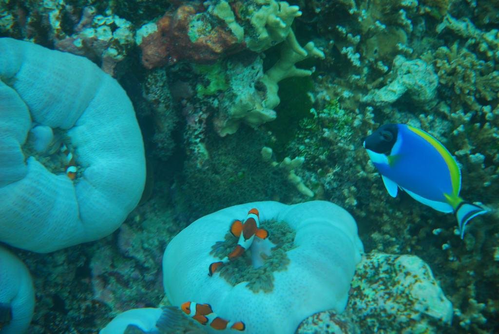 Phuket Similan Islands