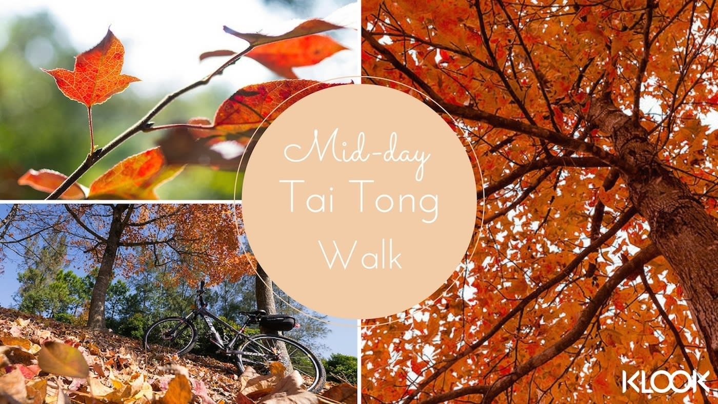 hiking, hiking trail, hiking in hong kong, hiking with lover, hiking with boyfriend, hiking with girlfriend, Tai Tong, Maple Leaf