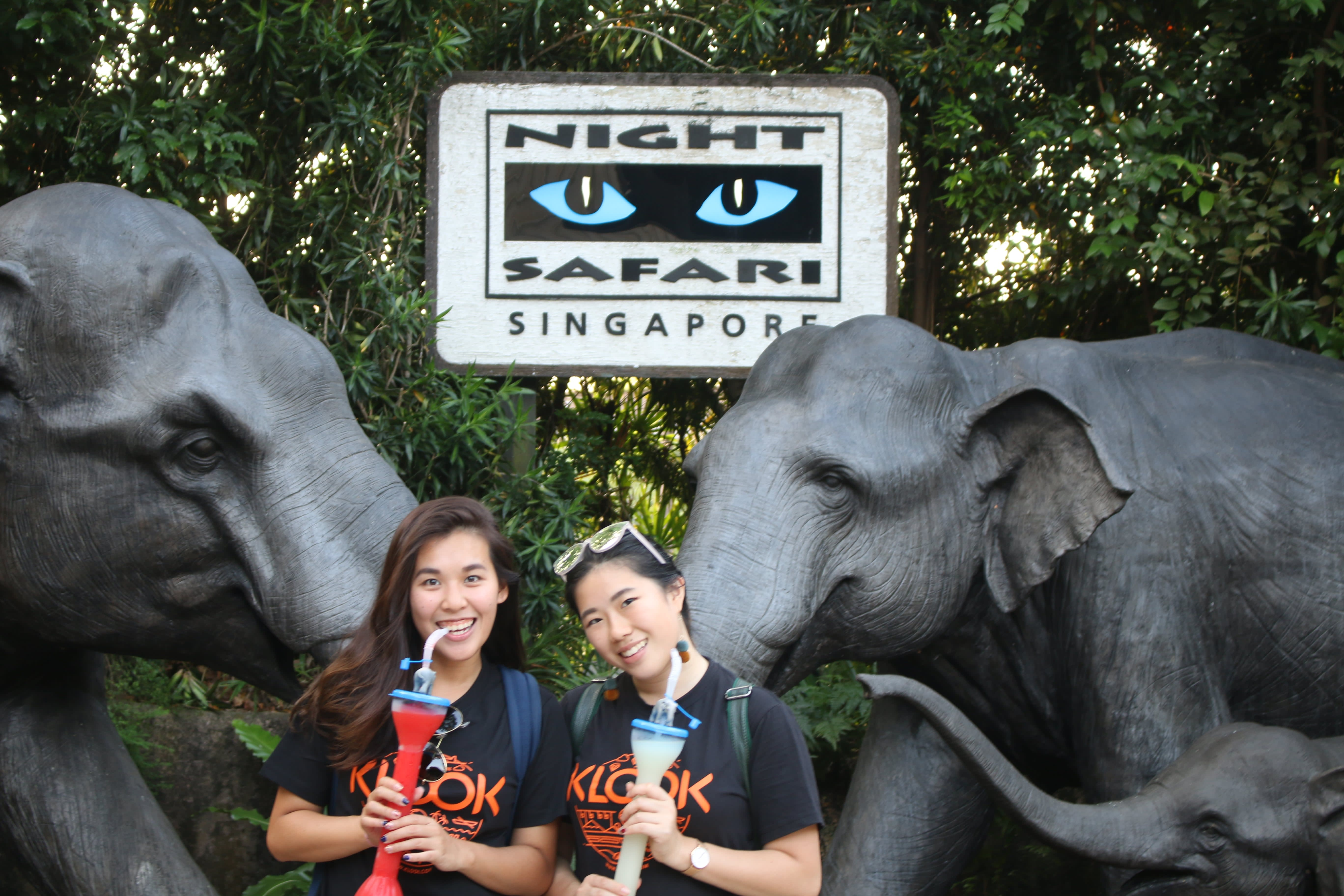 all-you-need-to-know-about-Singapore's-zoological-parks-night-safari
