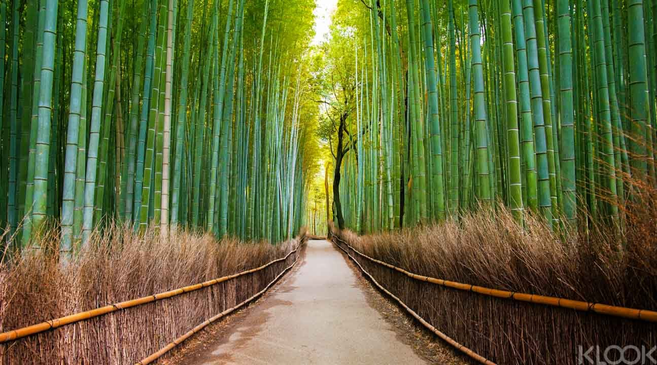 how-to-use-your-jr-pass-kansai-bamboo-forest