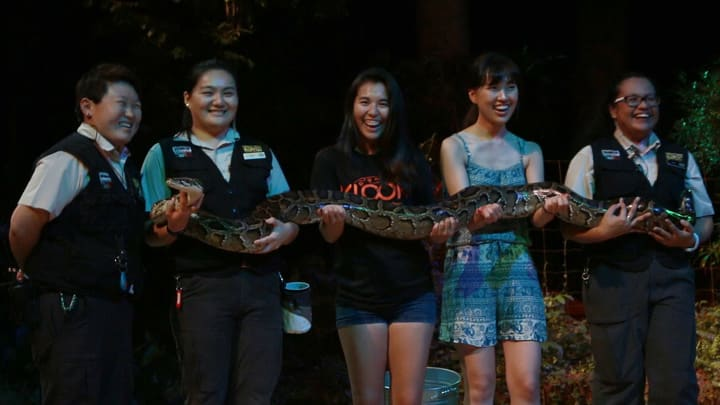 all-you-need-to-know-about-Singapore's-zoological-parks-creatures-of-the-night-show-snake