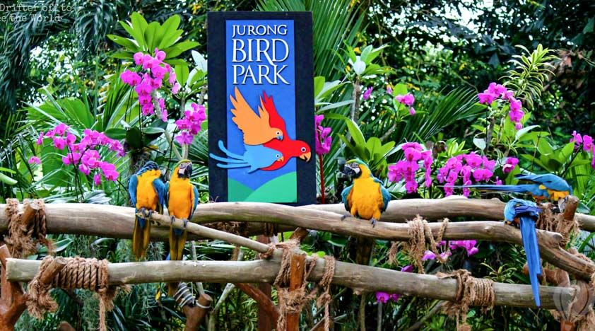 all-you-need-to-know-about-Singapore's-zoological-parks-jurong-bird-park