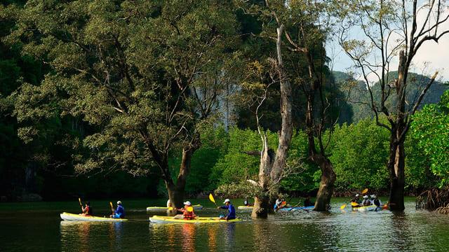 Krabi Mangrove Kayaking