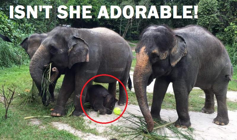 Baby Elephant 1