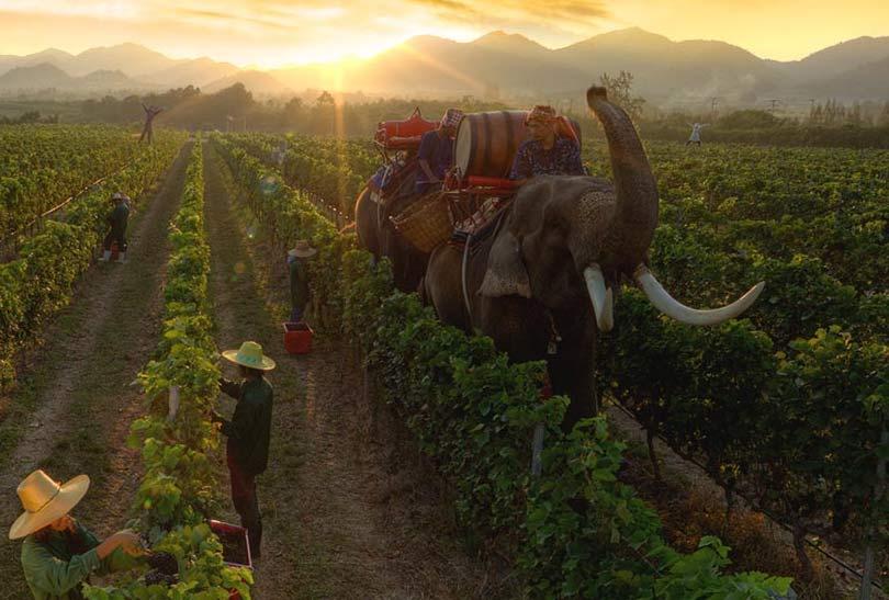 Hua-Hin-Car-Charter-Monsoon-Valley-Vineyard