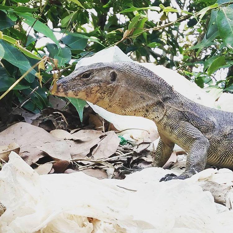 paloma-mexico