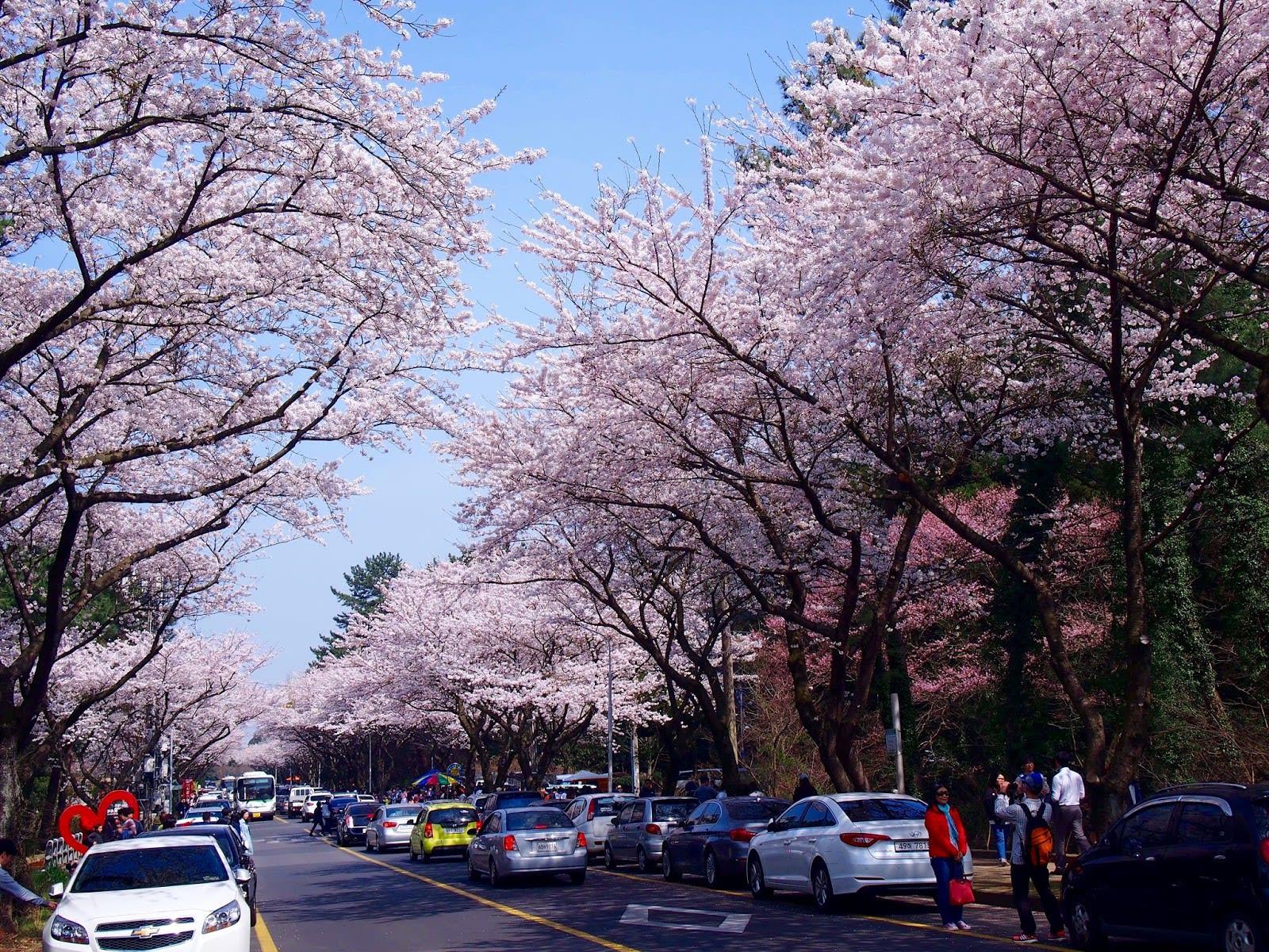 Jeju Flower Festival