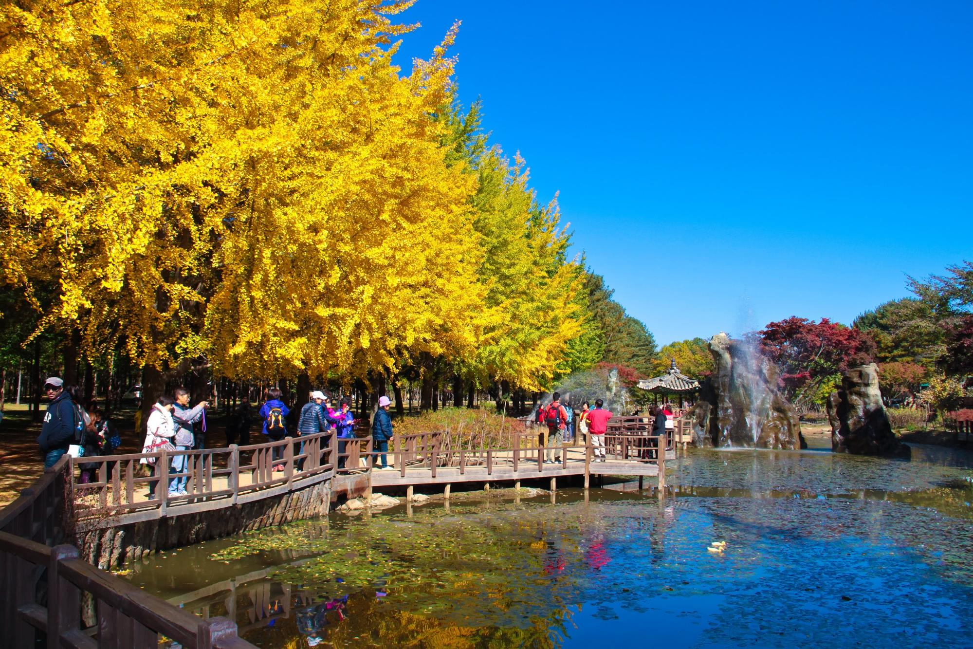 Autumn foliage at Nami Island