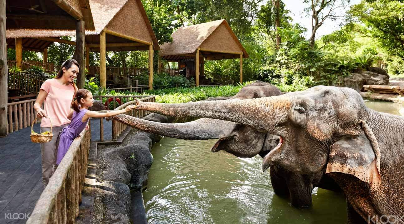 singapore-zoo-feed-elephant