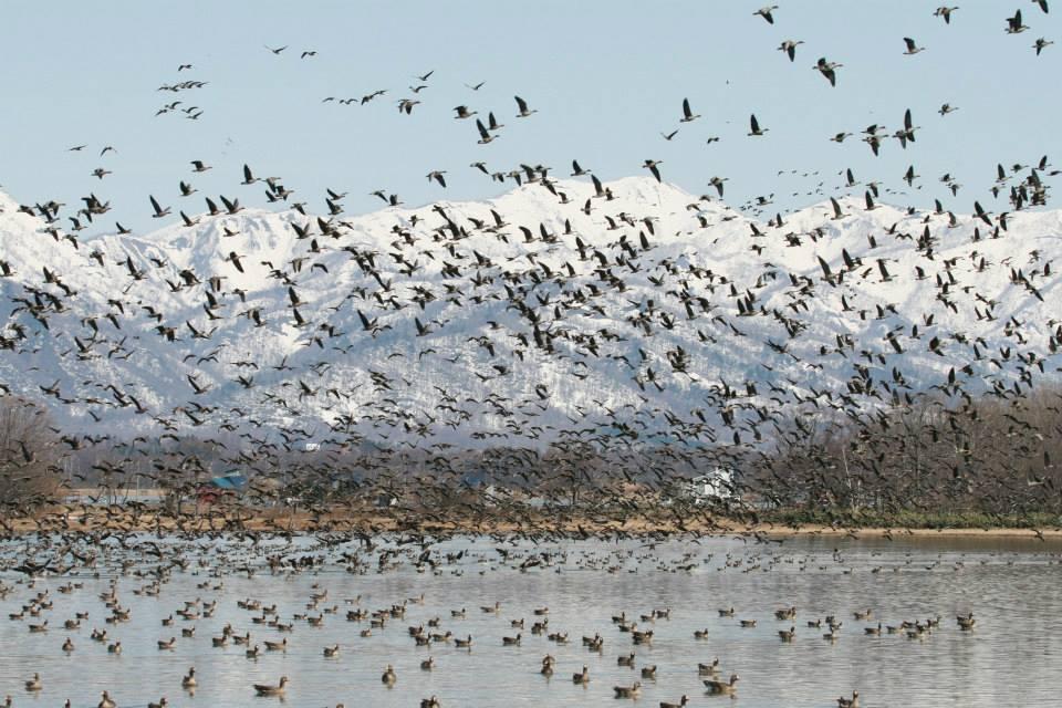 Views of the birds at the Ramsar Convention at Miyajima-numa Park