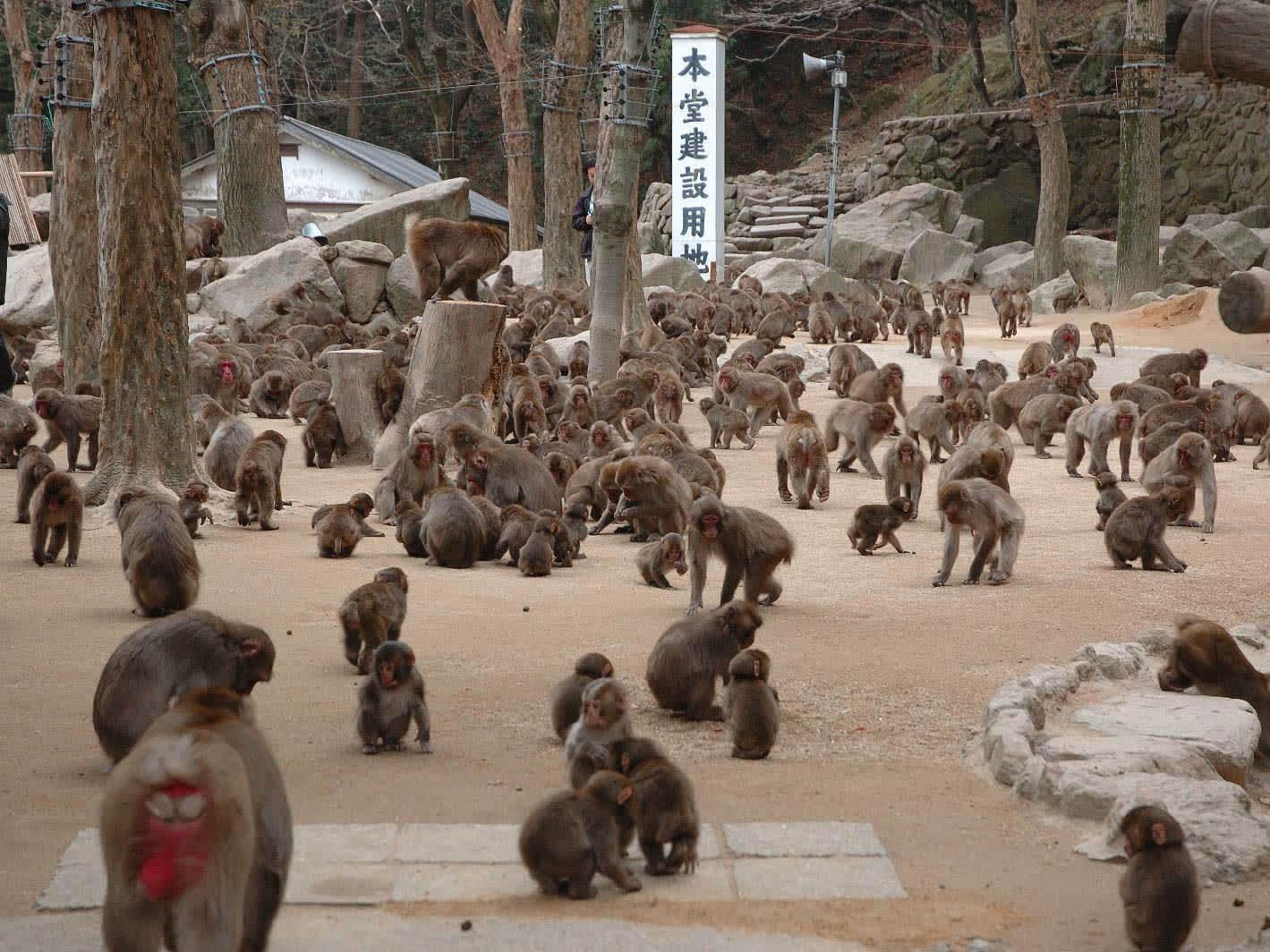 Takasakiyama Nature Zoo