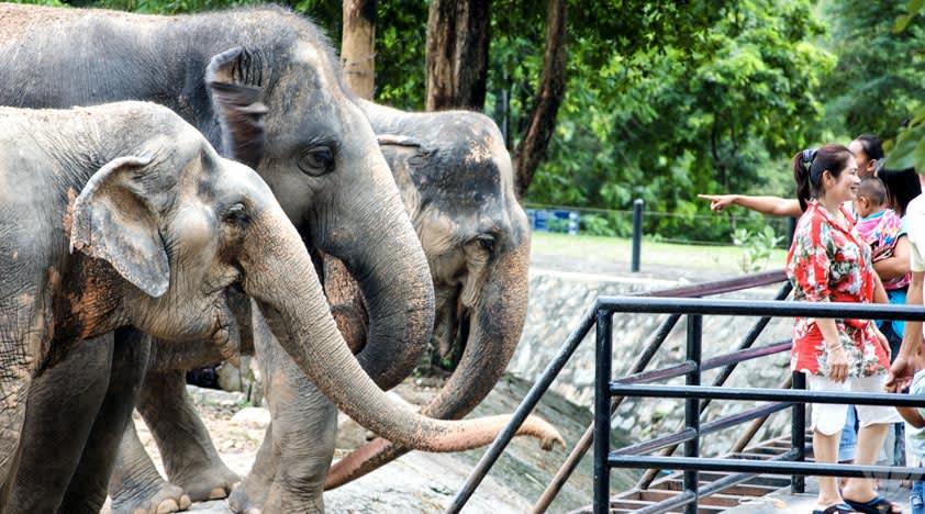 Khao Kheow Open Zoo Pattaya