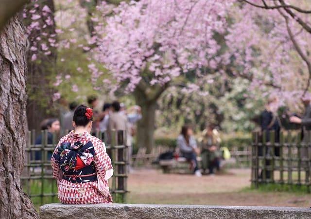 Kimono Kyoto during cherry blossom season
