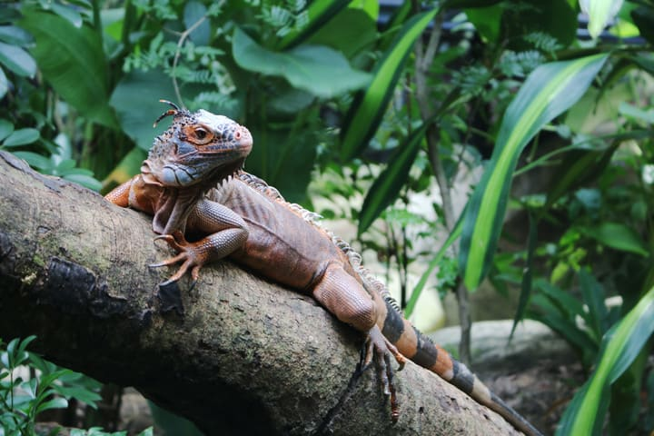 all-you-need-to-know-about-Singapore's-zoological-parks-reptopia