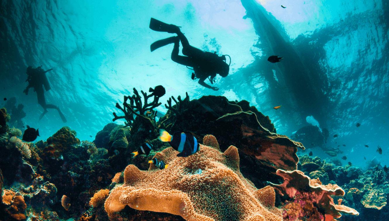 scuba diving nz