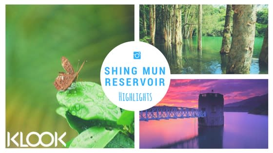 hiking, hiking in hong kong, hiking with kids, hiking with family, shing mun reservoir, paper bark tree, butterflies
