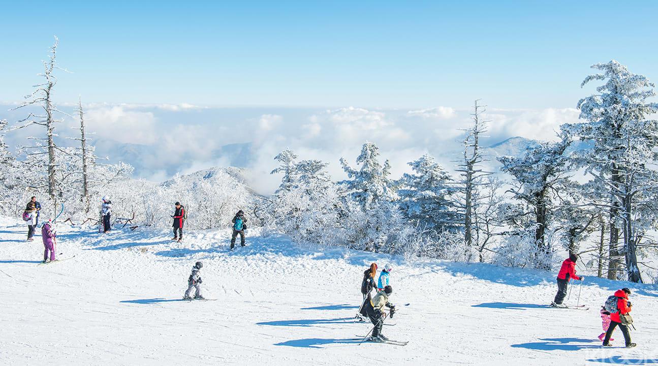 seoul ski tour