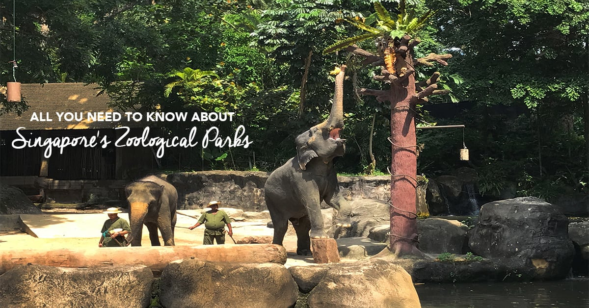 all-you-need-to-know-about-Singapore's-zoological-parks-cover