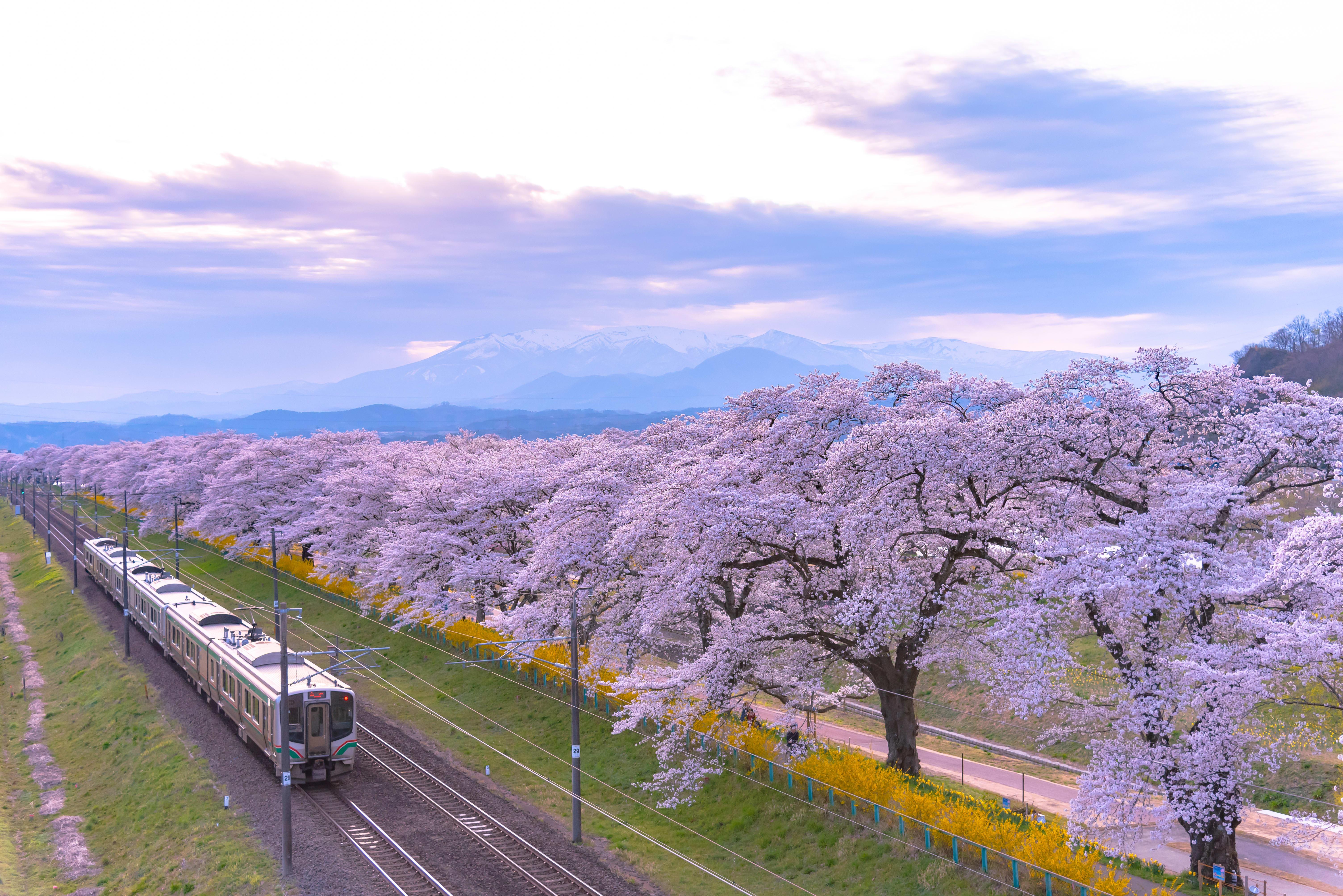 JR Pass Sakura