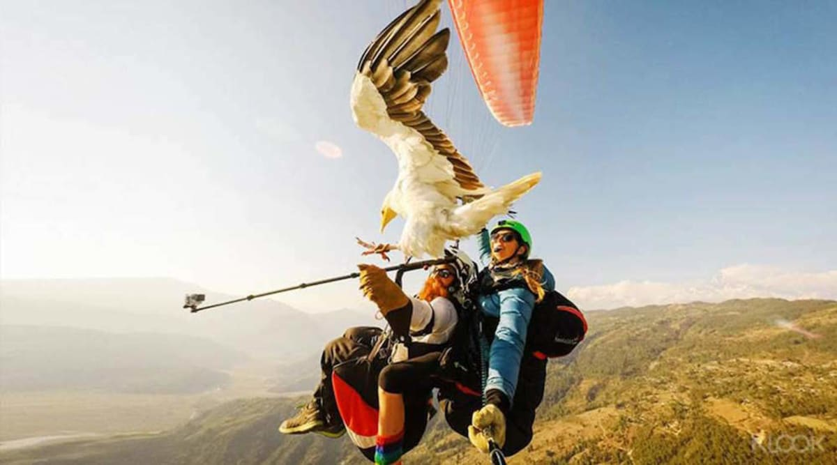 Parahawking Nepal