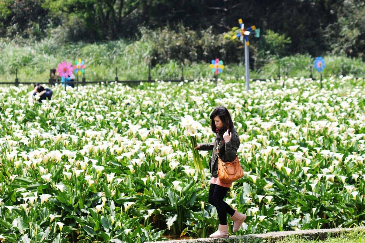 Calla Lily Festival