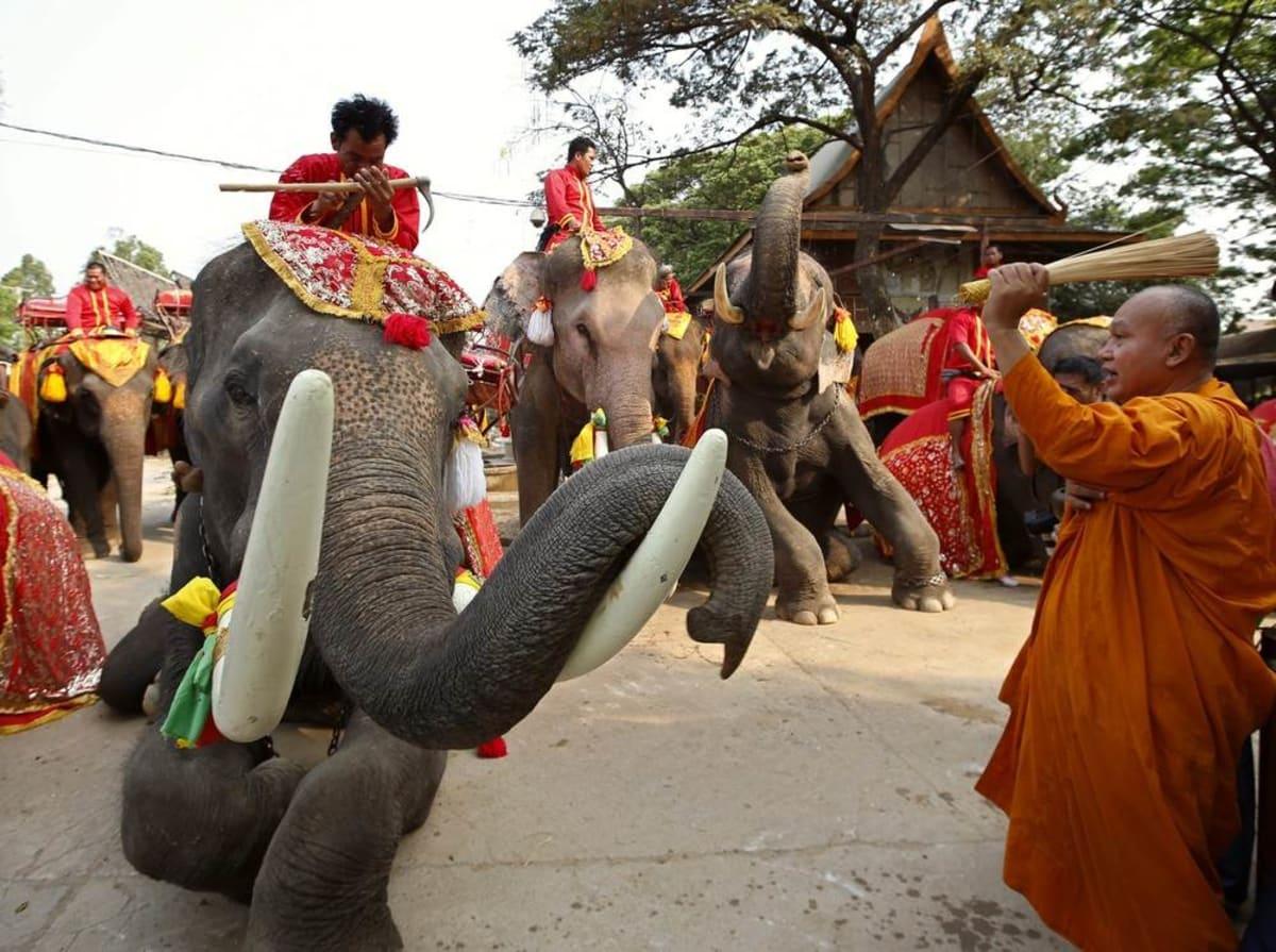 National Elephant Day