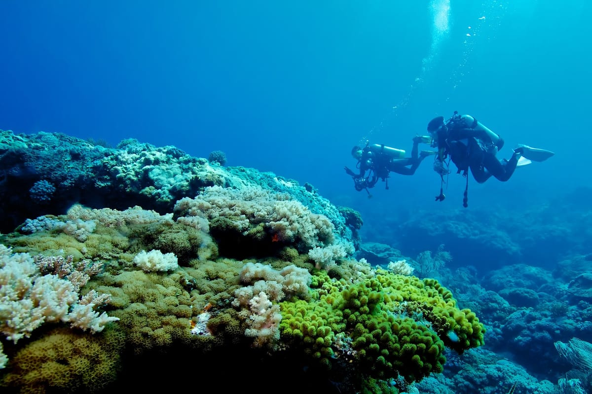 Green Island Diving