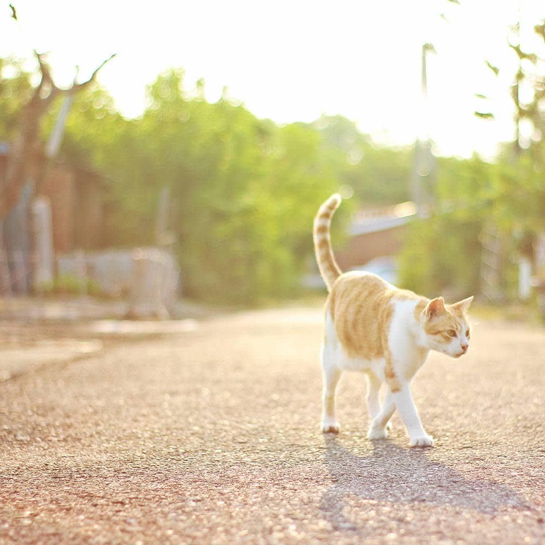 來到台鹼宿舍附近,可以看到不少貓咪的蹤跡。(圖片來源/Instagram-frank_1977)