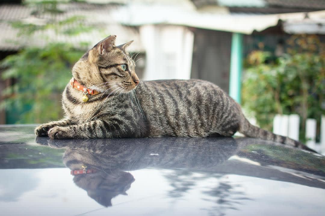 和貓咪一起渡過慵懶的午後。(圖片來源/Instagram-lsw.foto)