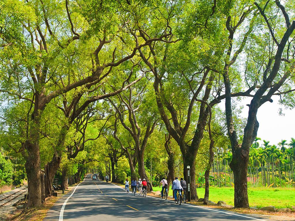 在綠色隧道騎單車,感覺悠閒又放鬆。(圖片來源/旅遊臺灣網站)