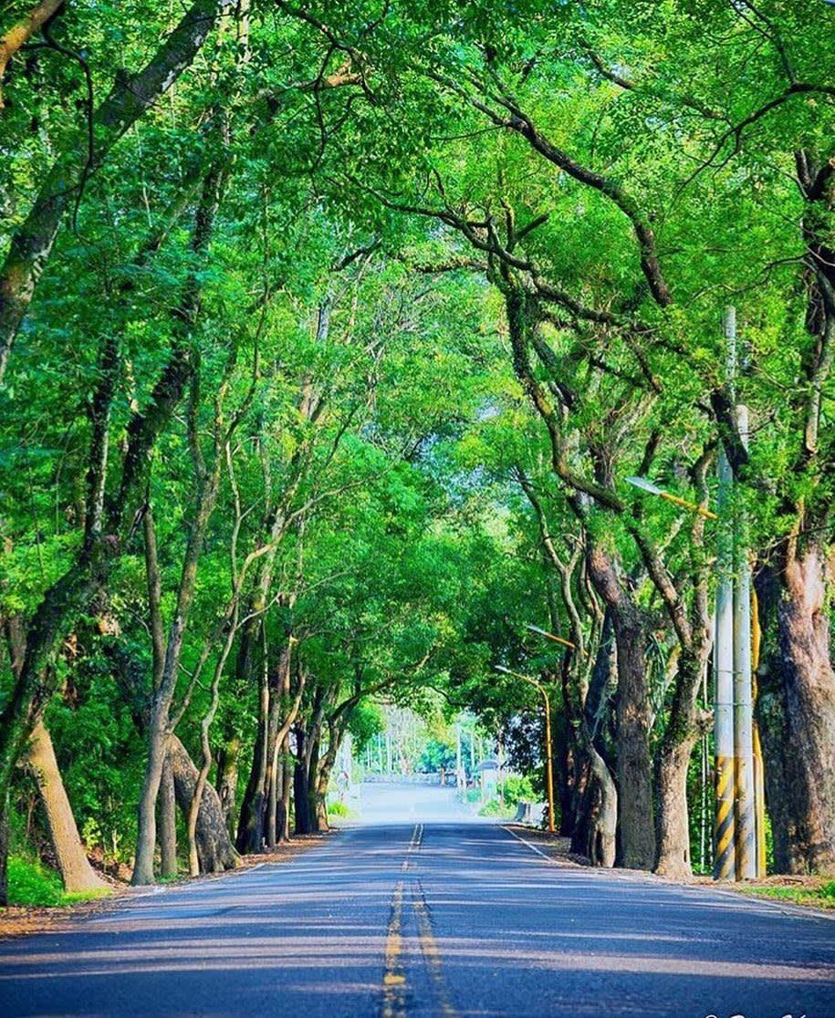 林蔭蓊鬱的綠色隧道,看起來十分迷人。(圖片來源/Instagram-bpintaiwan)