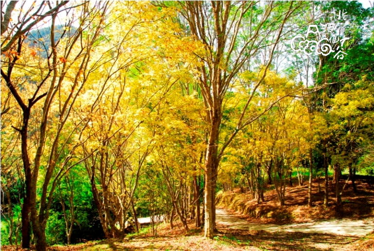 各 種 花 季 、 各 種 風 貌 的 桃 源 仙 谷 ( 圖 片 來 源 : 桃 源 仙 谷 官 網 )