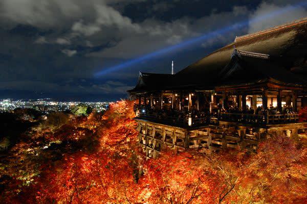 京都賞夜楓