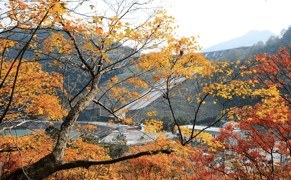 不 用 大 老 遠 跑 去 日 本 看 楓 紅 , 台 灣 也 處 處 是 美 景( 圖 片 來 源 : goo.gl/I3dIKJ )