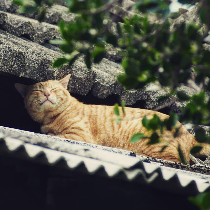 趴在屋簷上的可愛小橘貓。(圖片來源/Instagram-danny.works)