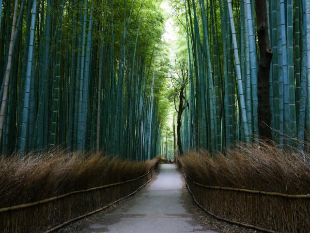 嵯 峨 野 竹 林 Photo by Ludovic Lubeigt CC by 2.0。