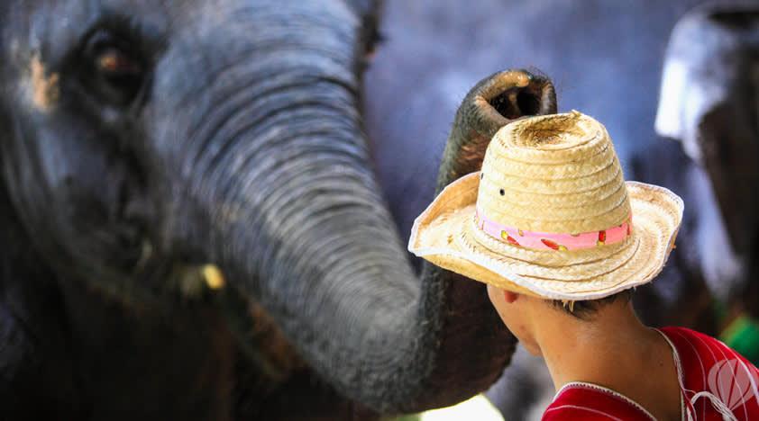 b8a8fc07-chiang-mai-elephant-camp-1