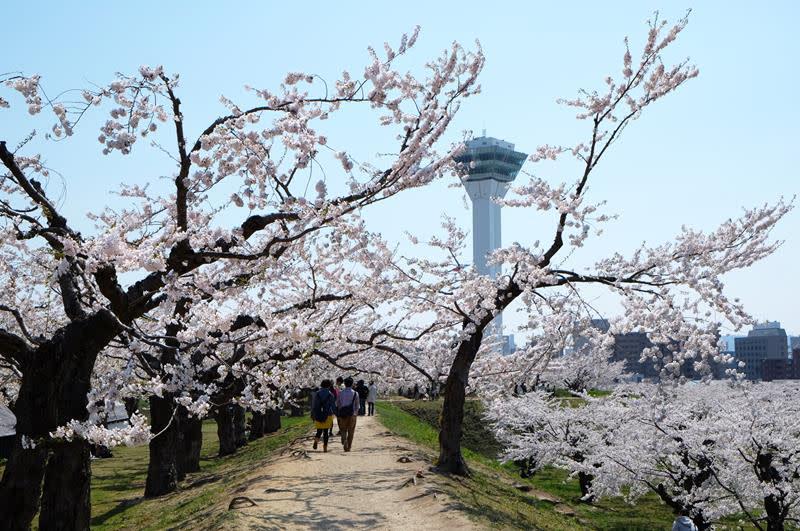 五稜郭公園(照片來源:函館市觀光資訊官方網站Hakodate Photo Library)https://goo.gl/2W6PU6