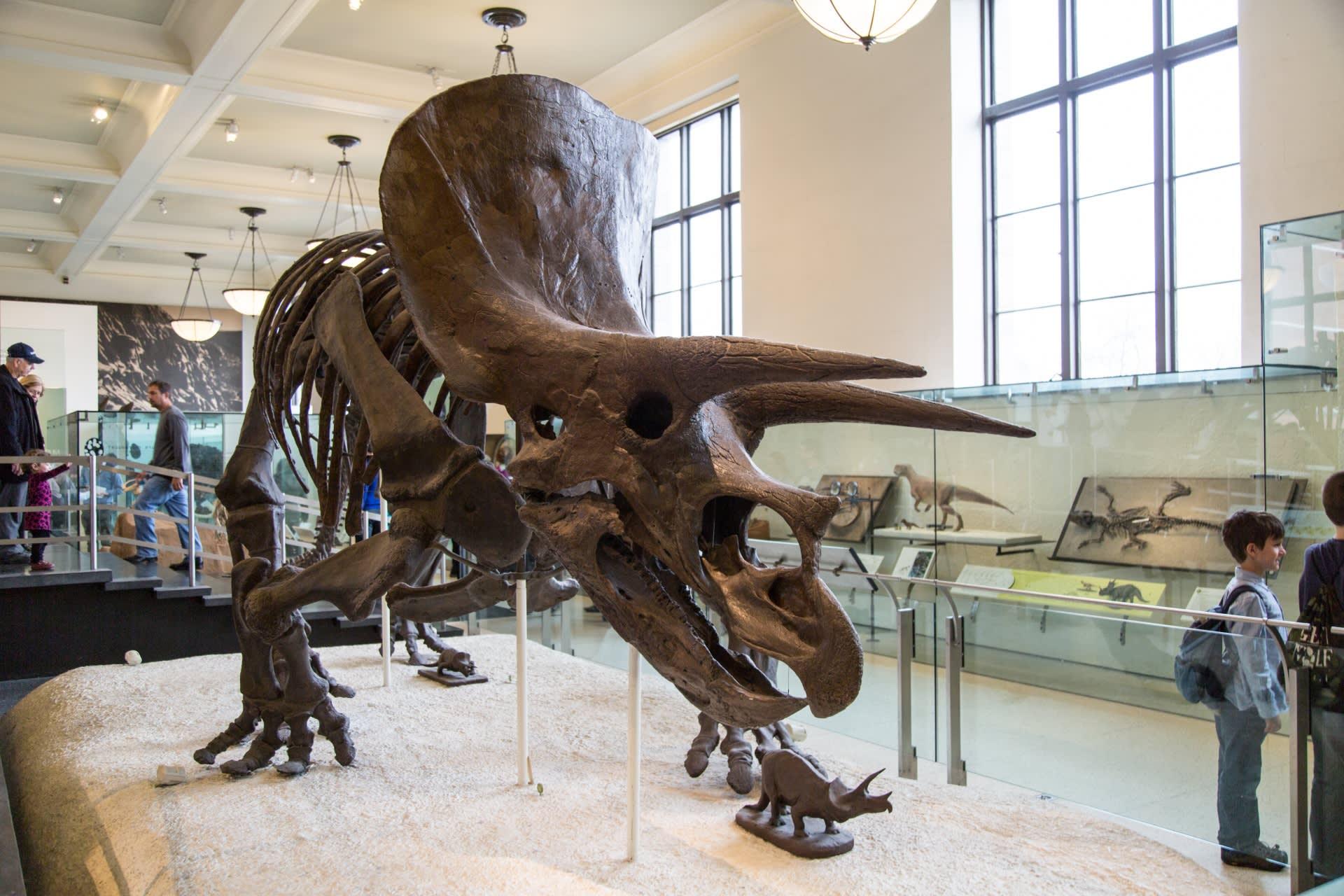 美國自然歷史博物館 圖片來源:Public Domain Pictures https://goo.gl/EEynMo